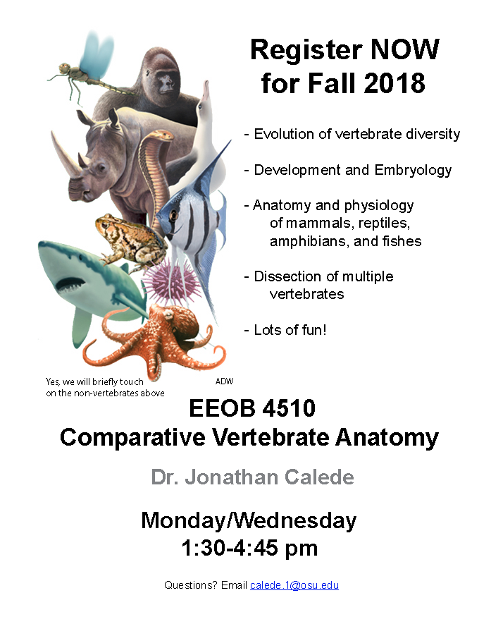 EEOB 4510 - Comparative Vertebrate Anatomy | The Ohio State ...